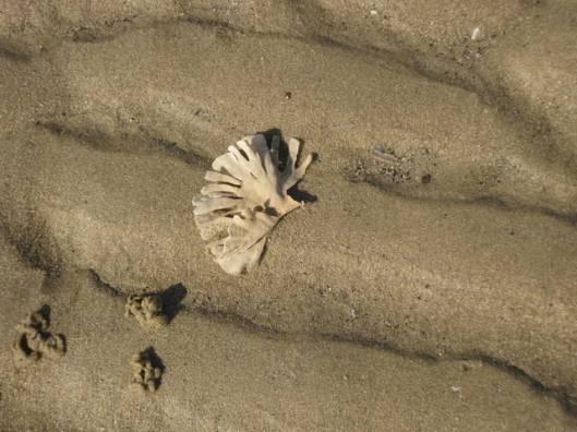 Seaweed - Horn Wrack