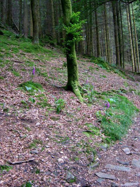 IMG_5236Dobgill wood