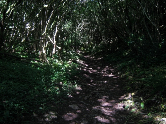 IMG_5358Walk through the wood