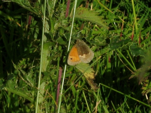IMG_5429Small Heath