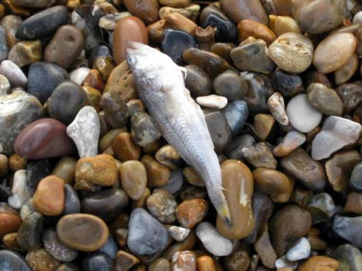 IMG_5770Dead fish
