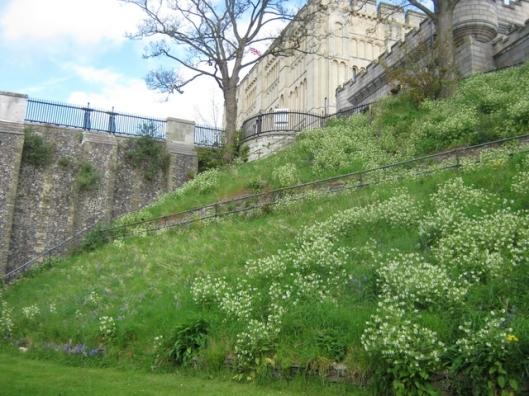 IMG_4487Norwich Castle