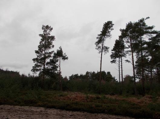 DSCN0115Tunstall forest