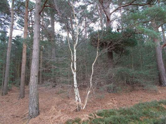 DSCN0116Tunstall forest