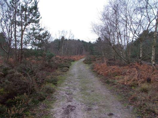 DSCN0121Tunstall forest