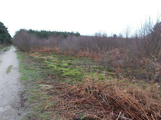 DSCN0125Tunstall forest