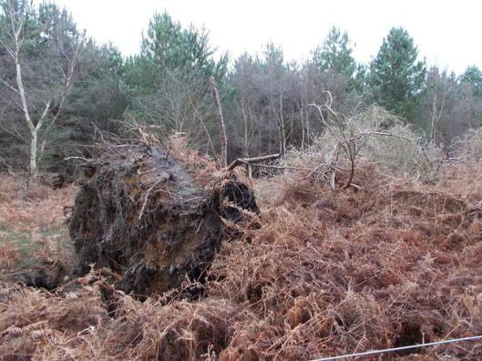 DSCN0131Tunstall forest