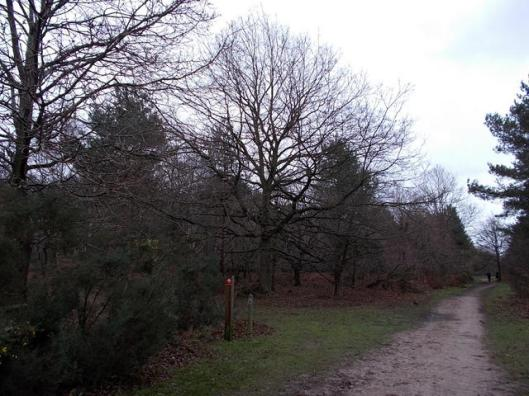 DSCN0134Tunstall forest
