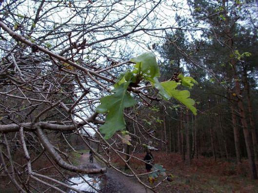 DSCN0136Tunstall forest
