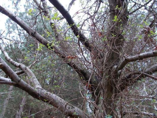 DSCN0144Tunstall forest