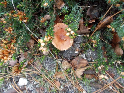 DSCN0149Tunstall forest