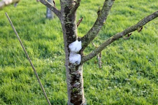 IMG_2557Snow on tree