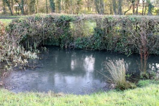 IMG_2558Corner pond