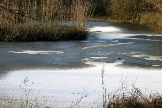 IMG_2559Big pond