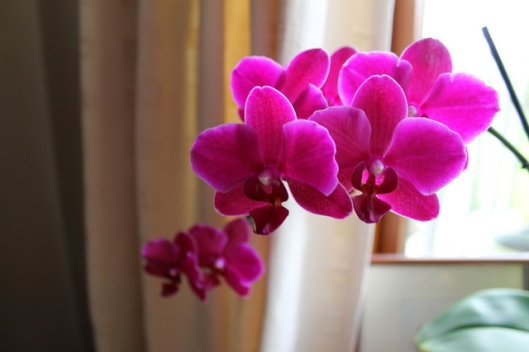 IMG_2602Orchid