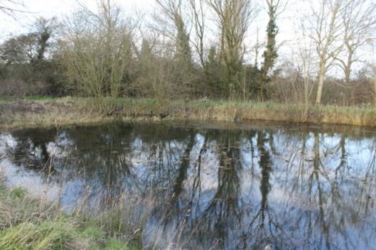 IMG_2659Big pond