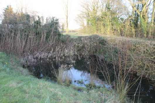 IMG_2668Corner pond