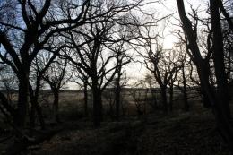 Minsmere trees