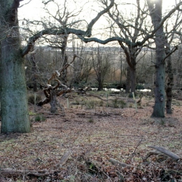 Minsmere trees