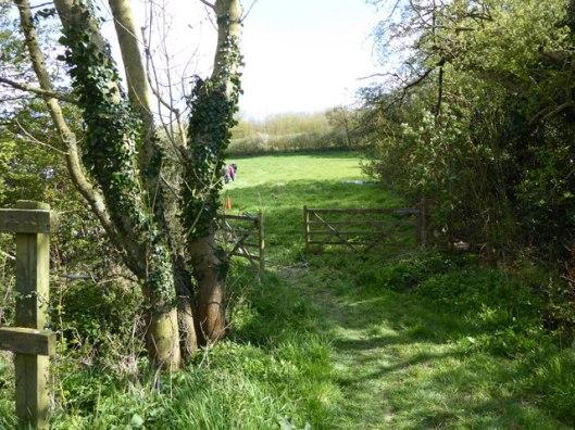 P1000011Fox Fritillary Meadow