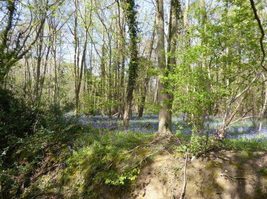 P1000116Reydon wood