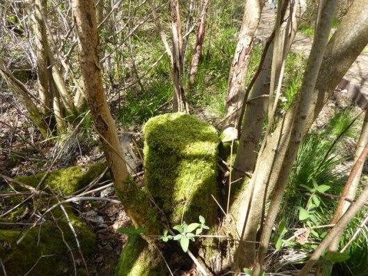 P1000121Reydon wood