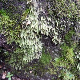 More moss