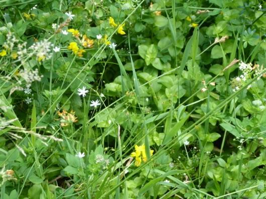 P1000850Wild flowers