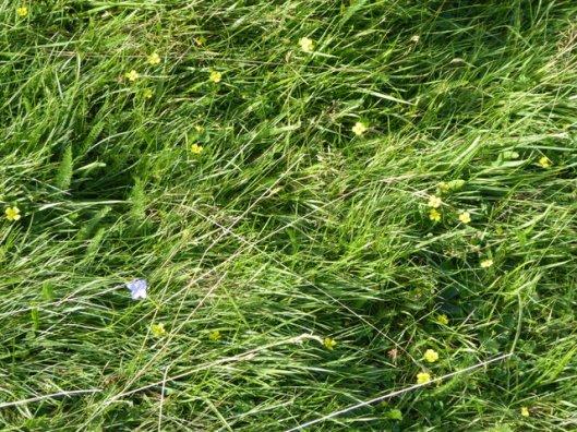 p1010051flowers