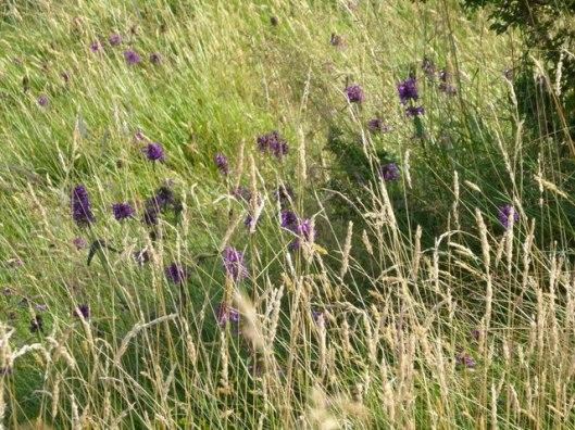 p1010055grasses