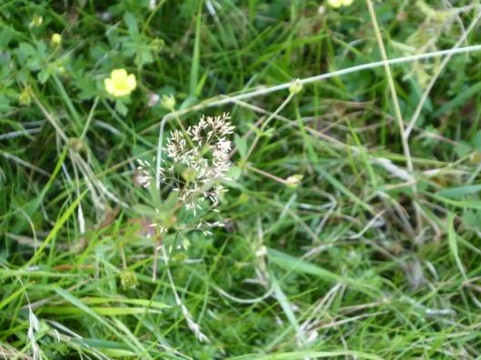 p1010056grass