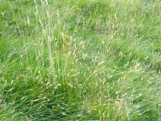 p1010058grasses