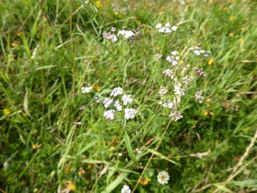 p1010134flower