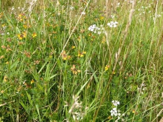 p1010135flowers