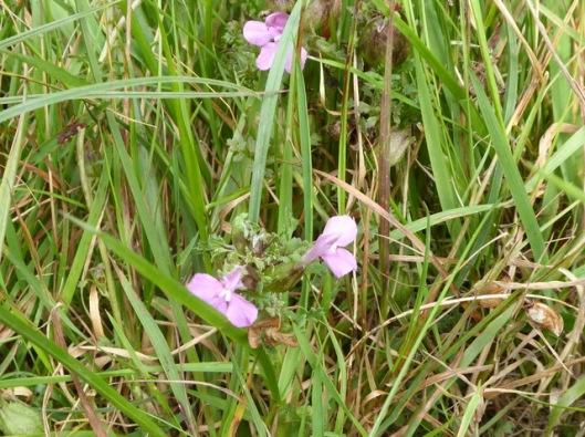 p1010155flower