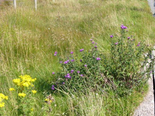p1010193flowers