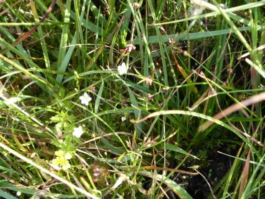 p1010195flowers
