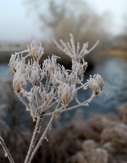img_2825frost-and-fog