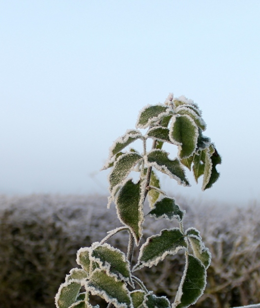img_2830frost-and-fog