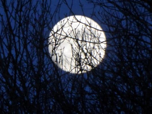 p1010605full-moon-11-01-17