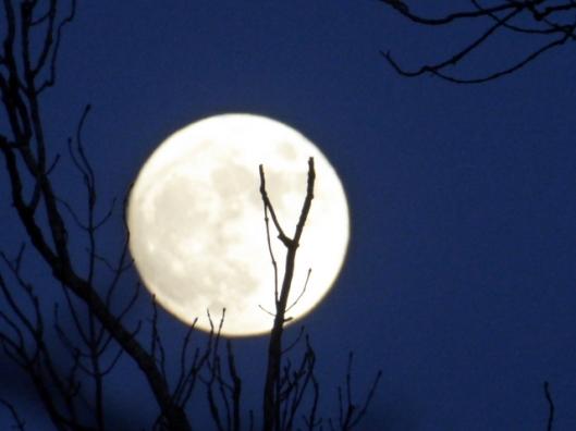 p1010607full-moon
