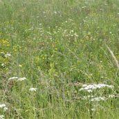 P1060600wild flowers (2)
