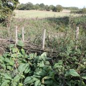 An overgrown withy fence round an allotment with views of the countryside beyond